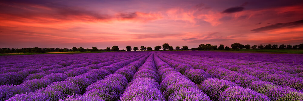 Photo Wallpaper with Flower Fields