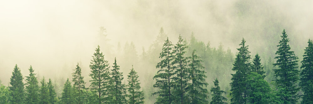 Photo Wallpaper with misty nature