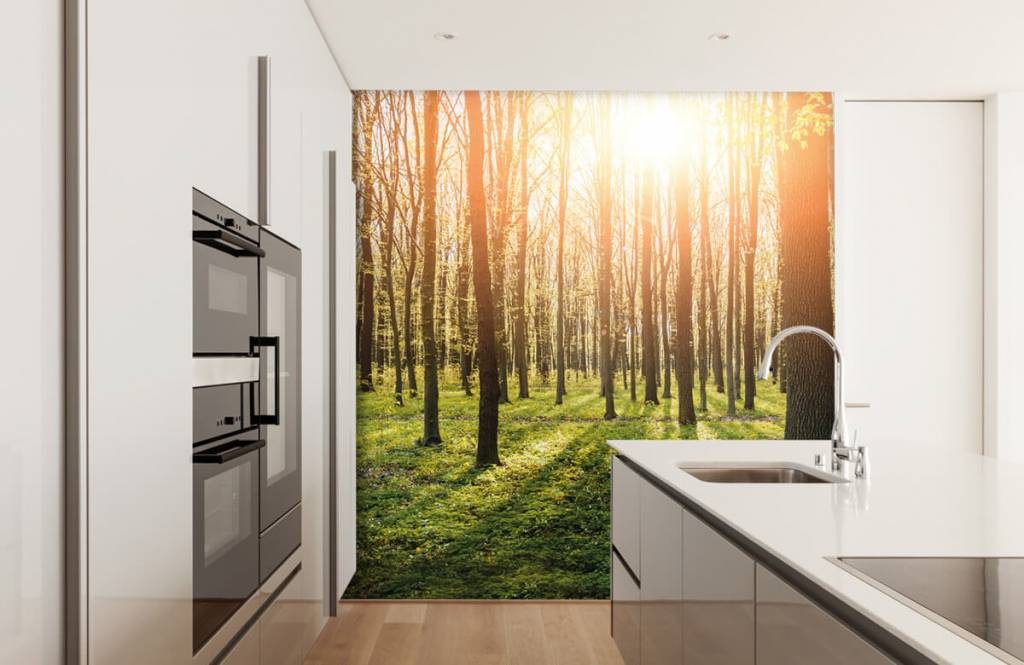 Forest wallpaper - Evening sun in a forest - Hallway 1