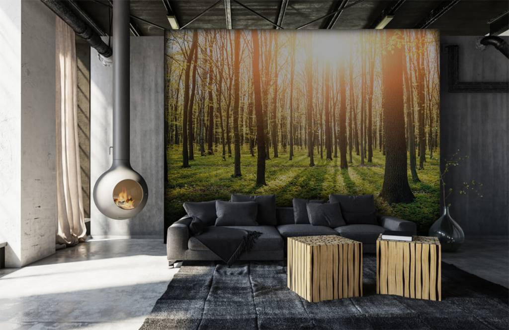 Forest wallpaper - Evening sun in a forest - Hallway 6