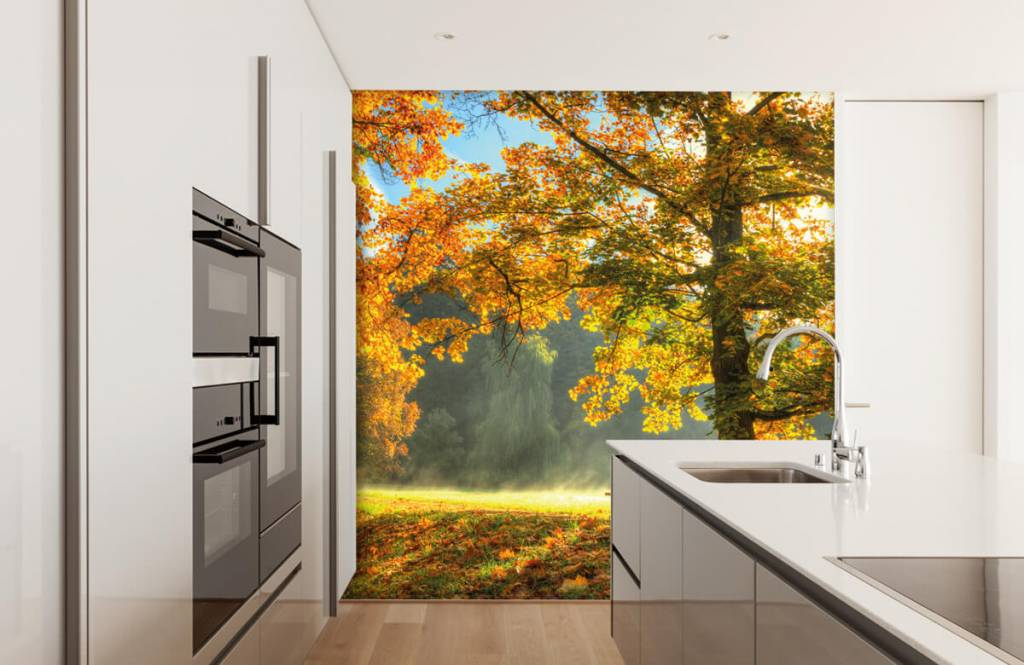 Forest wallpaper - Tree in autumn colors - Bedroom 1