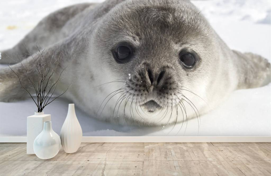 Toddlers - Close-up of a seal - Children's room 1