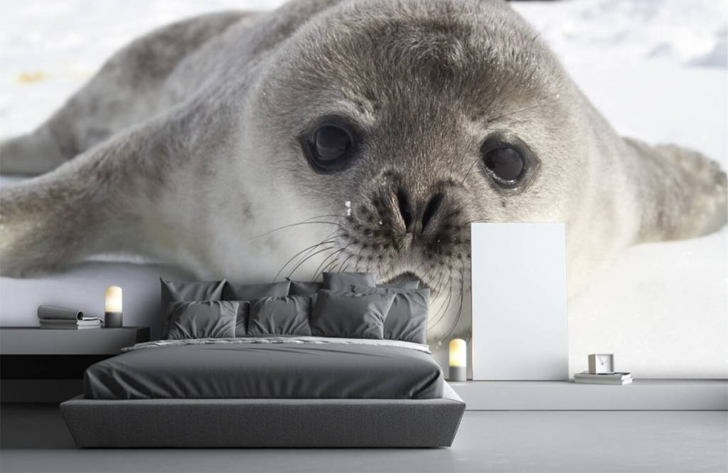 Toddlers - Close-up of a seal - Children's room 2