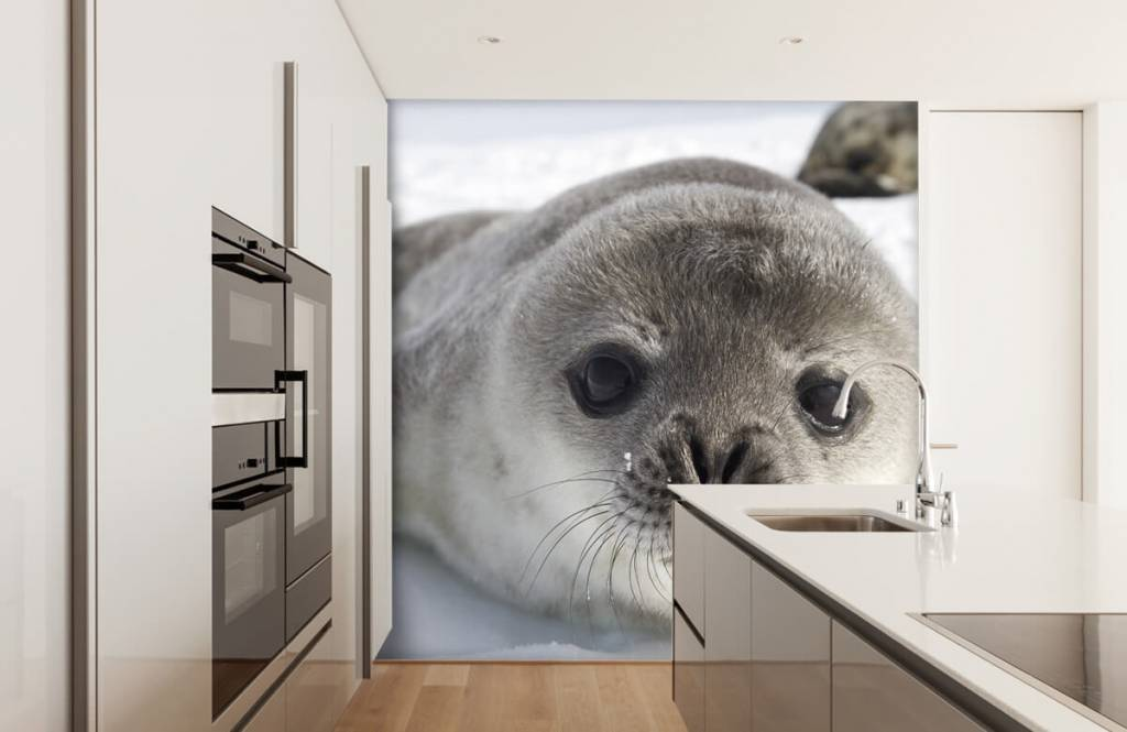 Toddlers - Close-up of a seal - Children's room 3