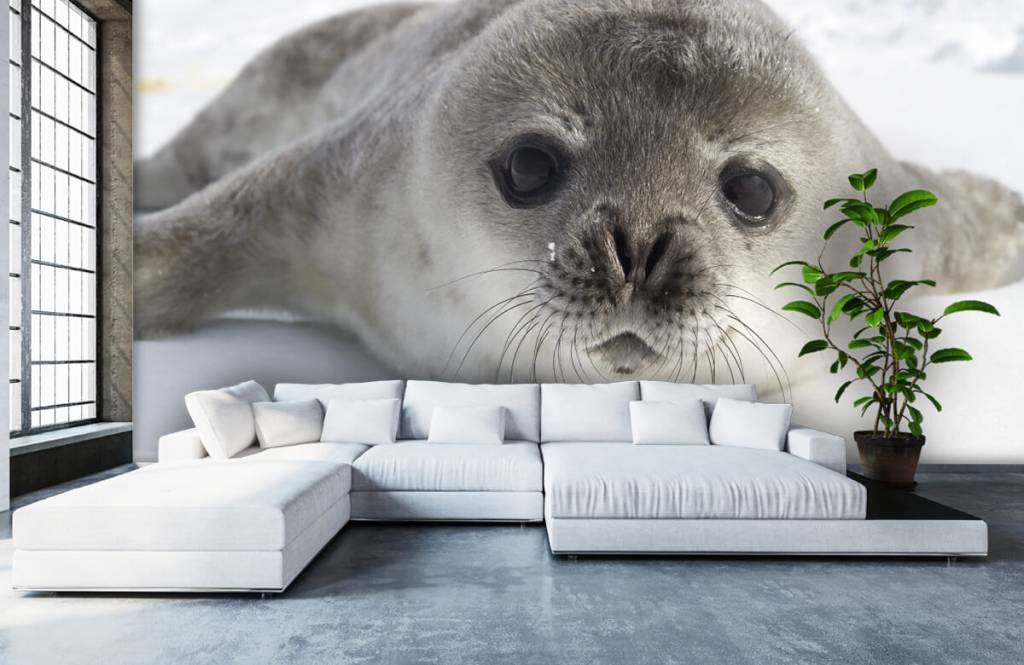 Toddlers - Close-up of a seal - Children's room 4