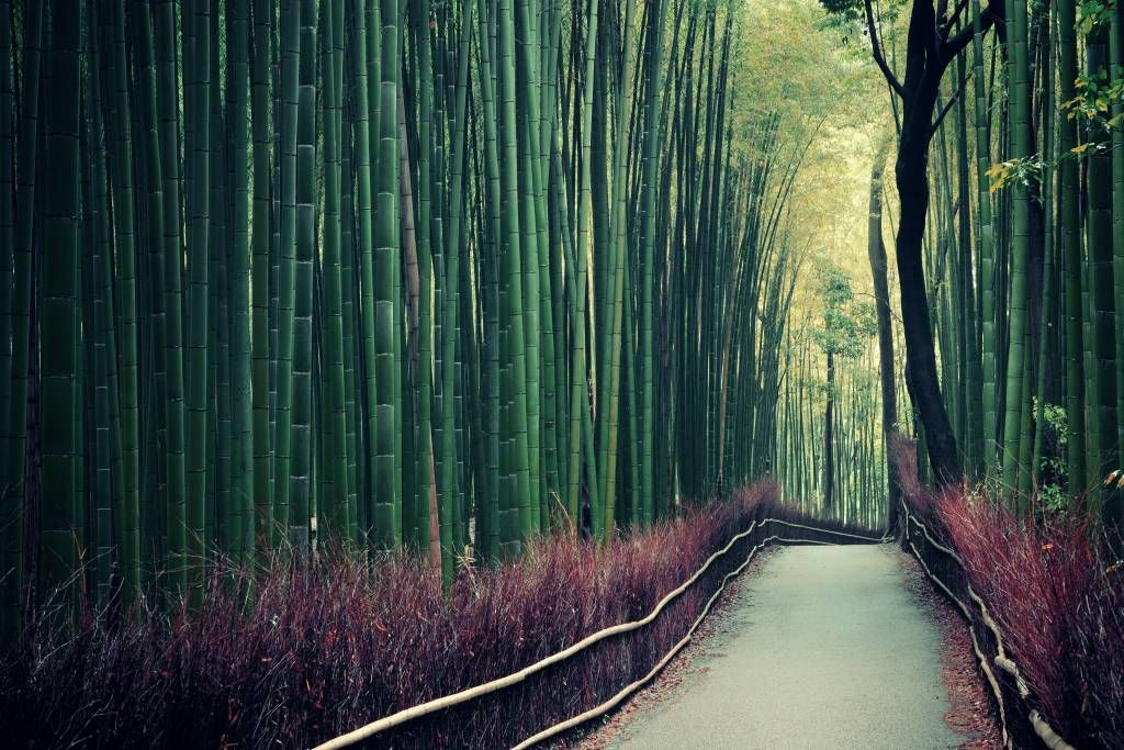 Forest wallpaper - Bamboo forest - Entrance