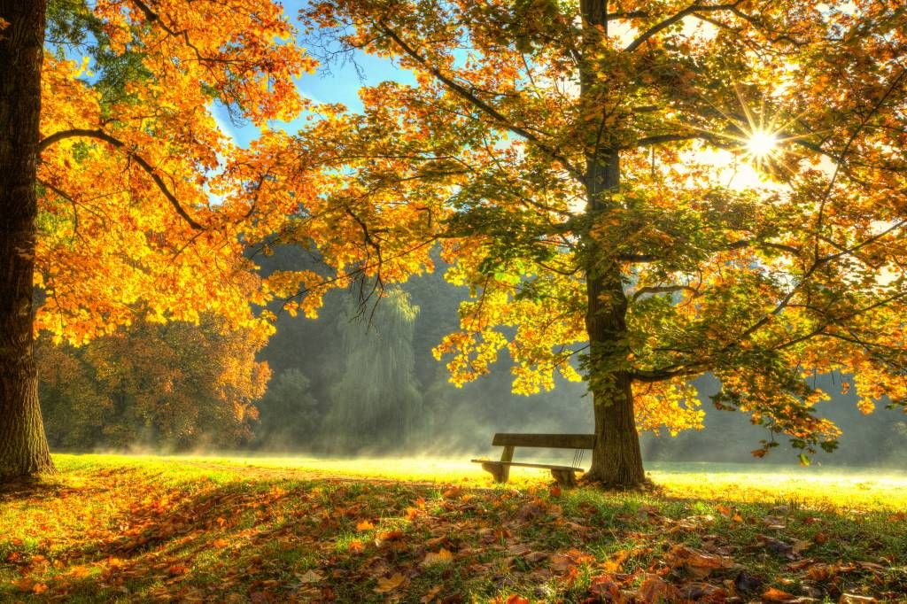 Forest wallpaper - Tree in autumn colors - Bedroom