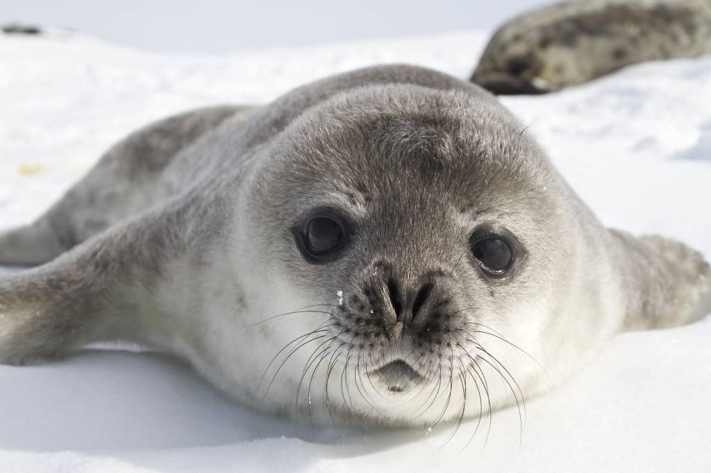 Toddlers - Close-up of a seal - Children's room